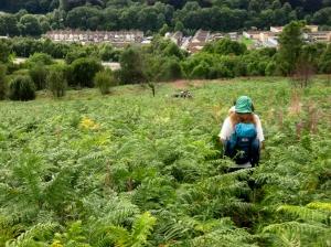 descending through ferns to Llwynypia