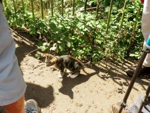 The tabby kitten