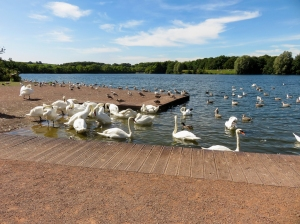 Cosmeston Country Park