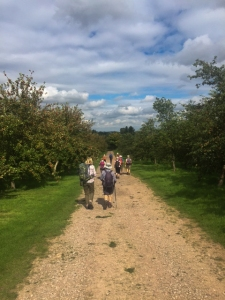 Passing through the orchards