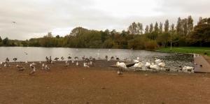 Cosmeston Park