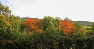 Autumnal colurs