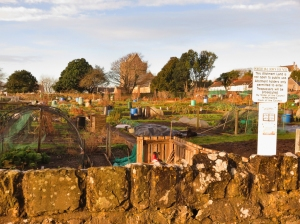 Allotments behind St John's Church
