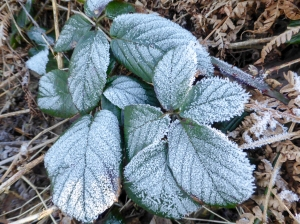 Hard frost overnight