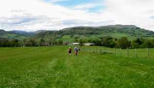 Grassy meadows back to start
