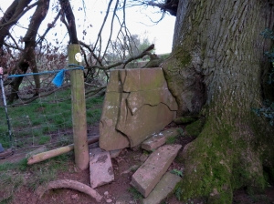 Stile being consumed by a tree