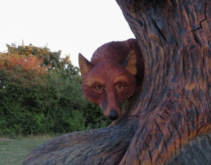 A sly fox