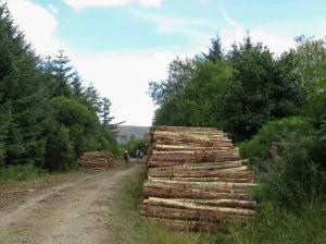 Logging taken place