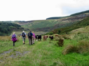 Heading up on reclaimed land to the head of the valley
