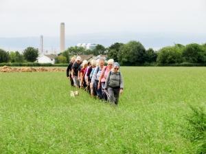 Crossing fields at Llanbethery