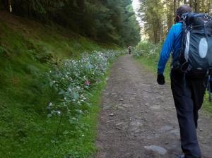 Festooned paths at Mynydd Gelliwion
