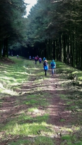 Heading uphill through forestry