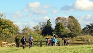Friendly horses near Groesfaen