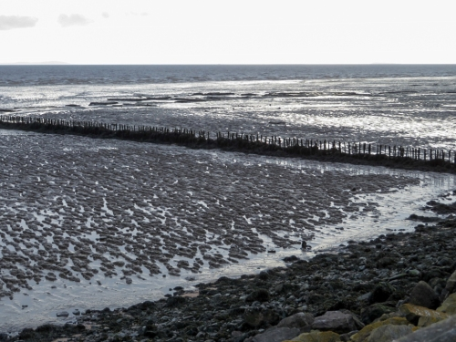 The sea wall and ancient fish traps