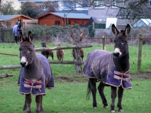 Donkeys and friends