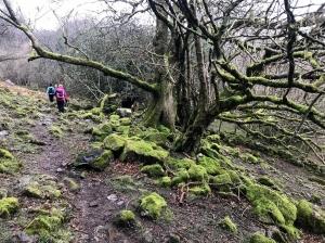 Descending at Craig y Cilau