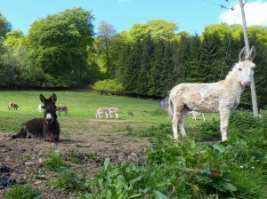 Castle Farm and retired donkeys