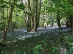 Newton Wood