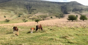 ponies in the valley on the way back