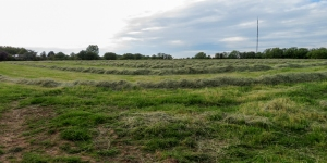 Fields cut for hay