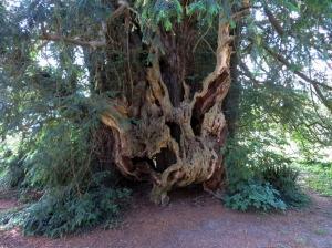 Bettws Newydd Old Yew
