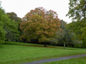 Autumn at Bedwellty Park