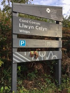 Starting from forestry car park of Coed Llwyn-celyn