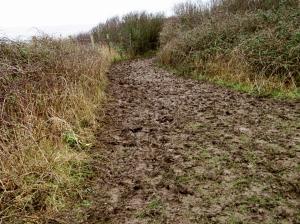 Mud on the WCP