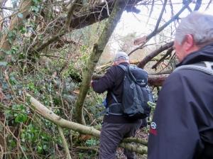 Negotiating a fallen tree